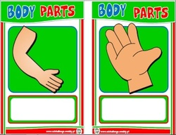 Body matching cards